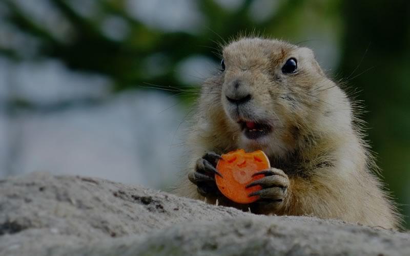 post-03-carrots-ipa-maria-fernandez-learn-english-pronunciation-featured